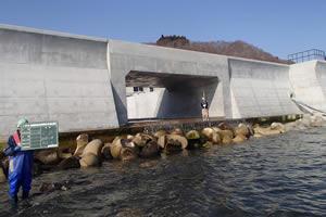 石倉海岸老朽化対策緊急工事(横山地先) 附帯工事01 完 成