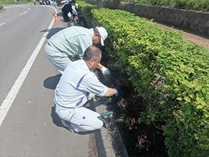 植栽活動函館ウェルカム・ロード 道道函館空港線植栽活動