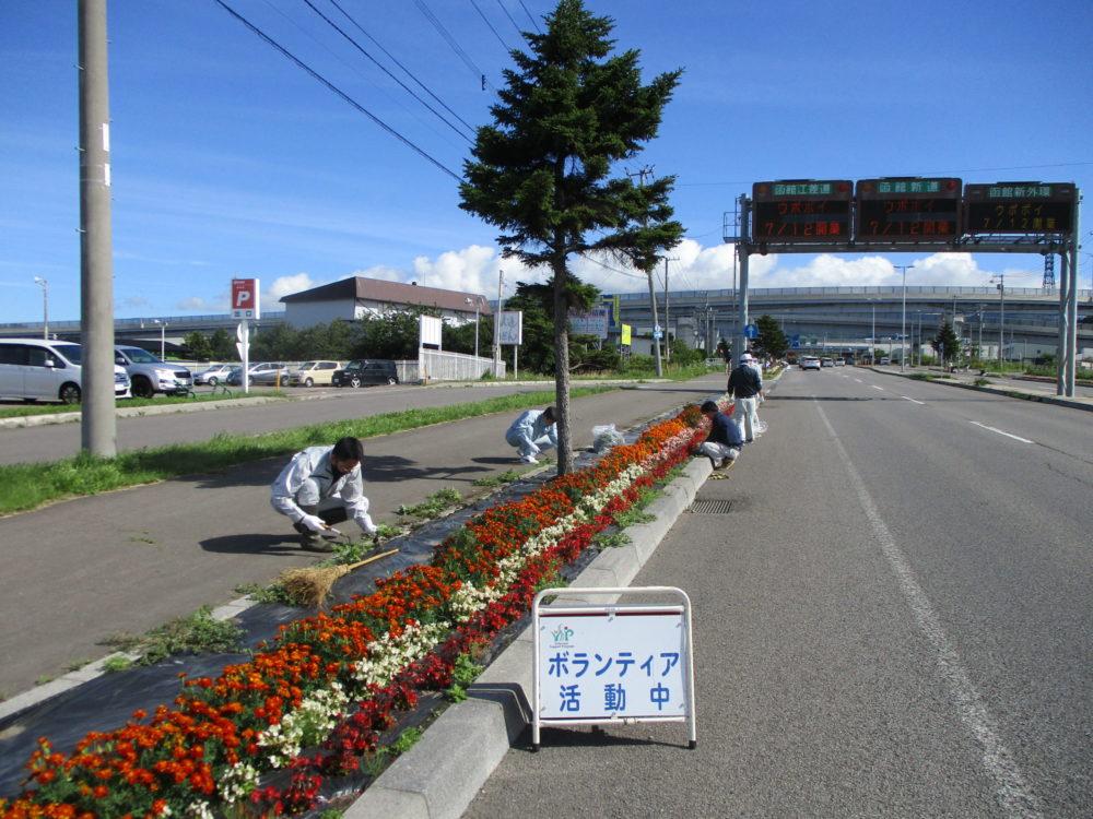 はこだて花かいどう 函館新道植栽活動③