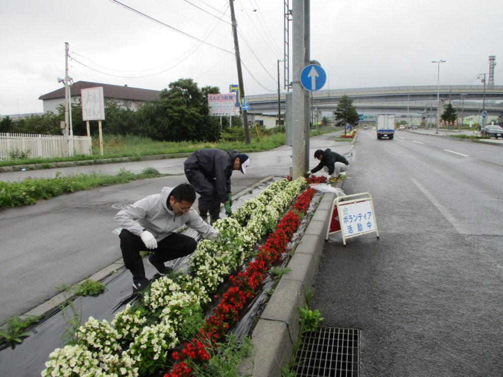 はこだて花かいどう 函館新道植栽活動④