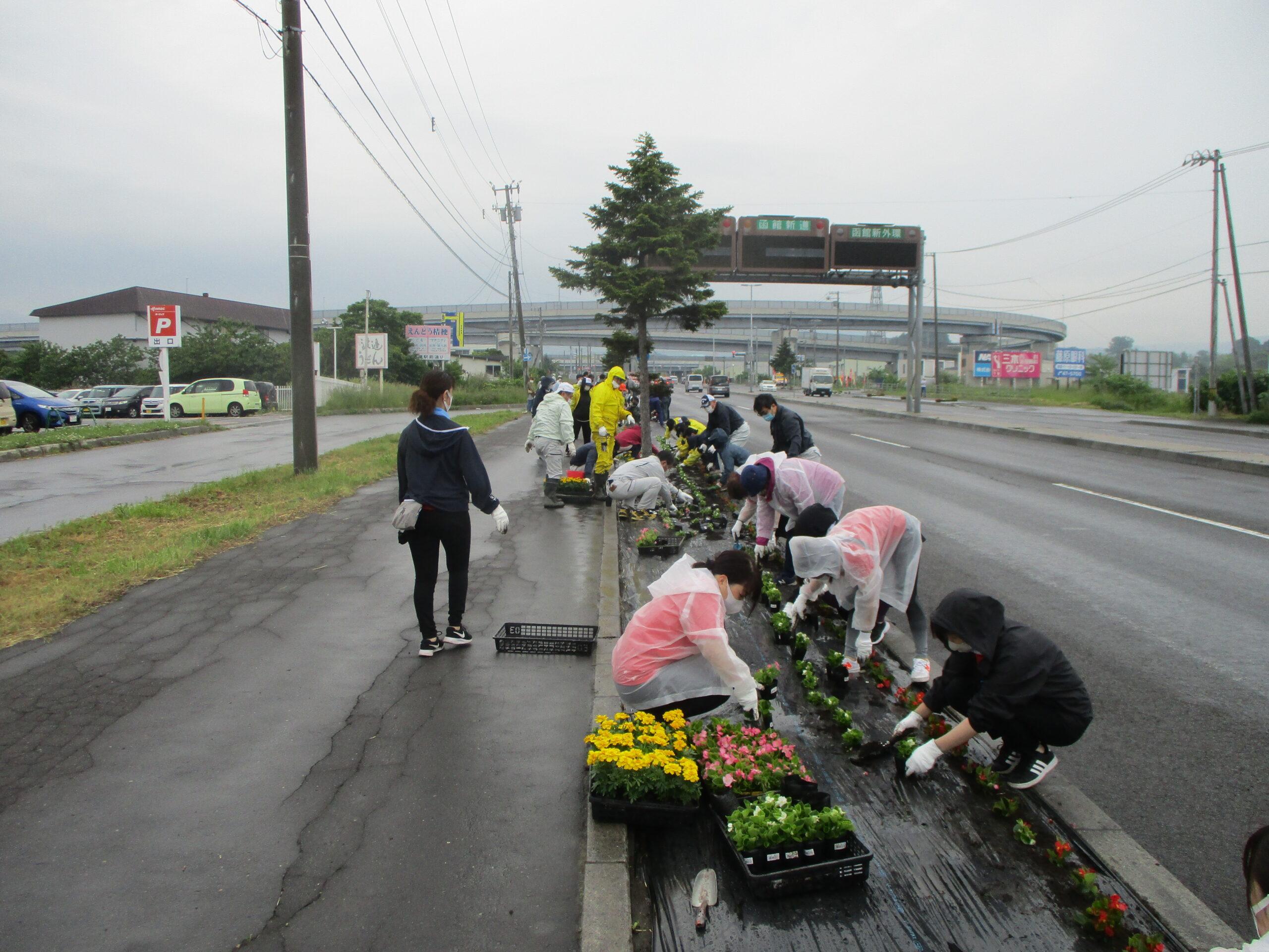 はこだて花かいどう 函館新道植栽活動①