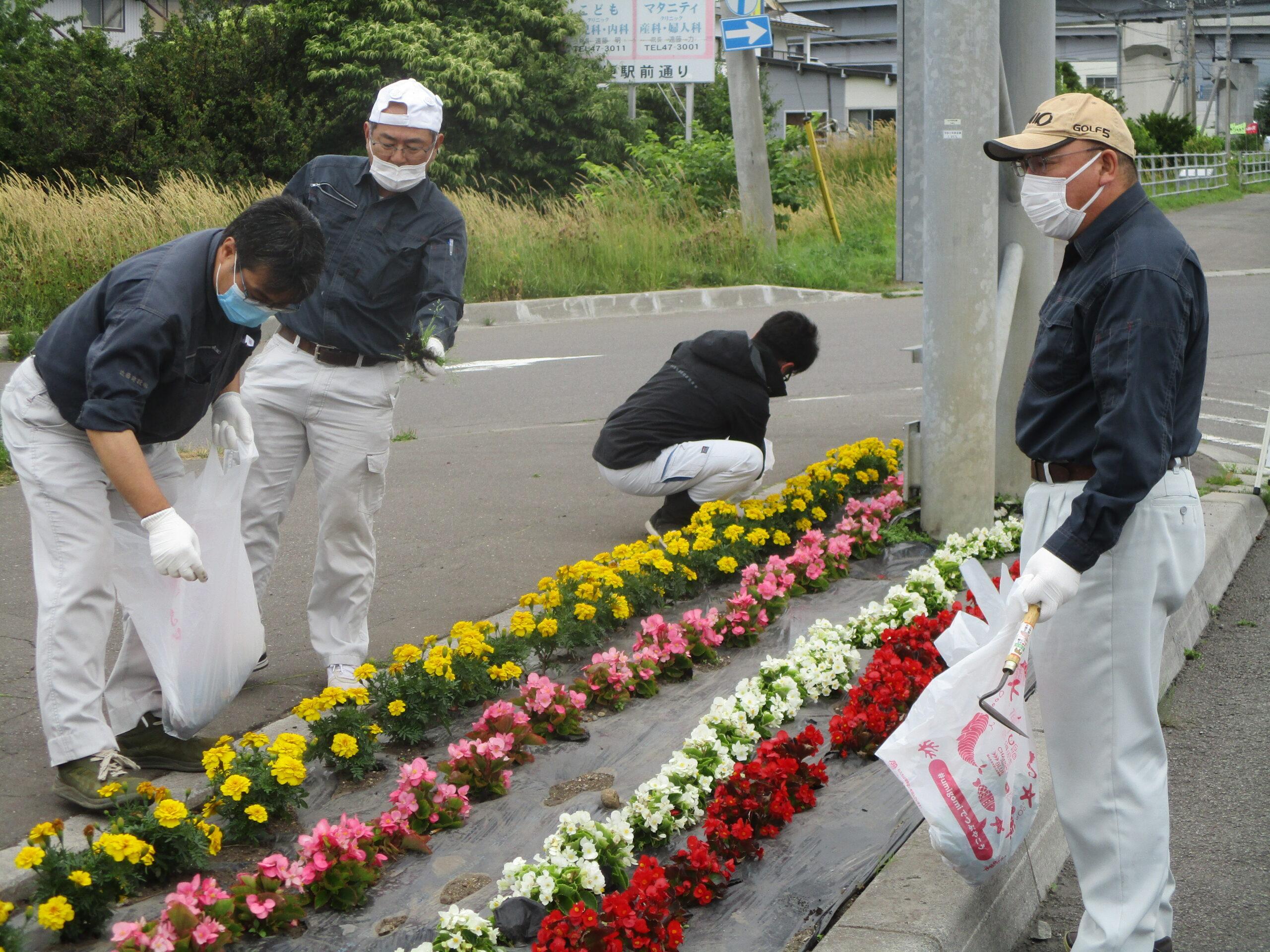 はこだて花かいどう 函館新道植栽活動②