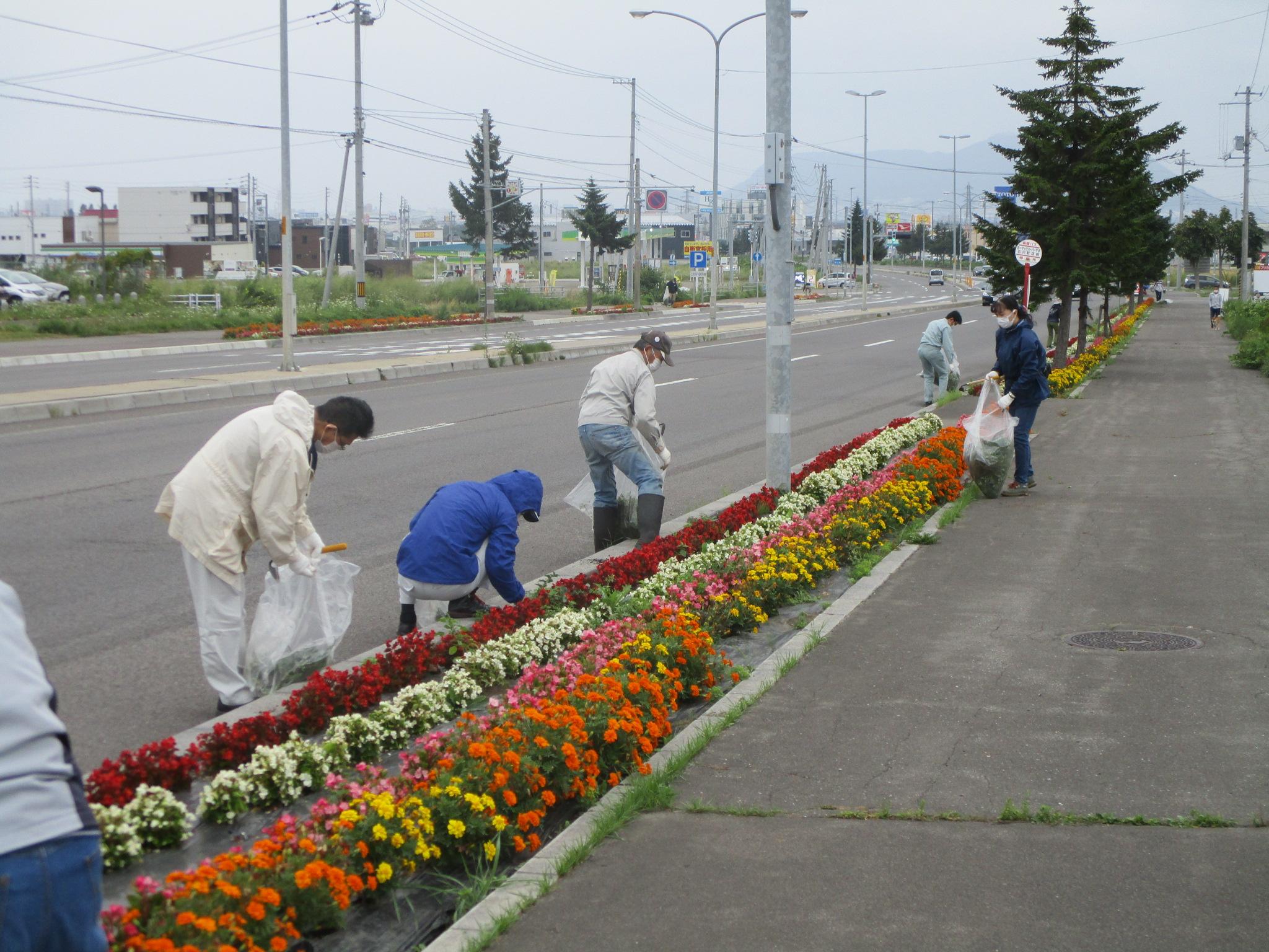 令和3年8月14日(土)はこだて花かいどう 函館新道植栽活動(8月)