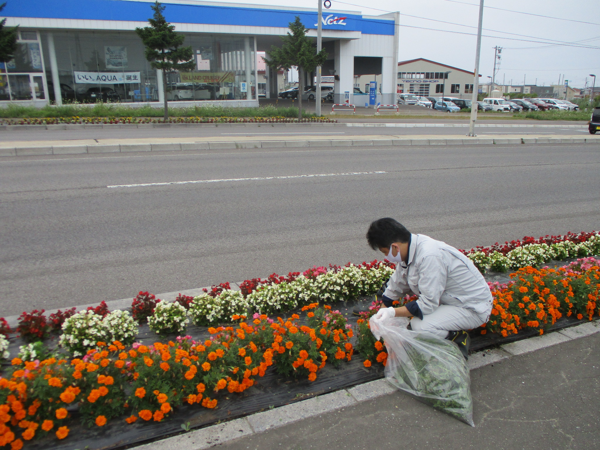 はこだて花かいどう 函館新道植栽活動(8月)